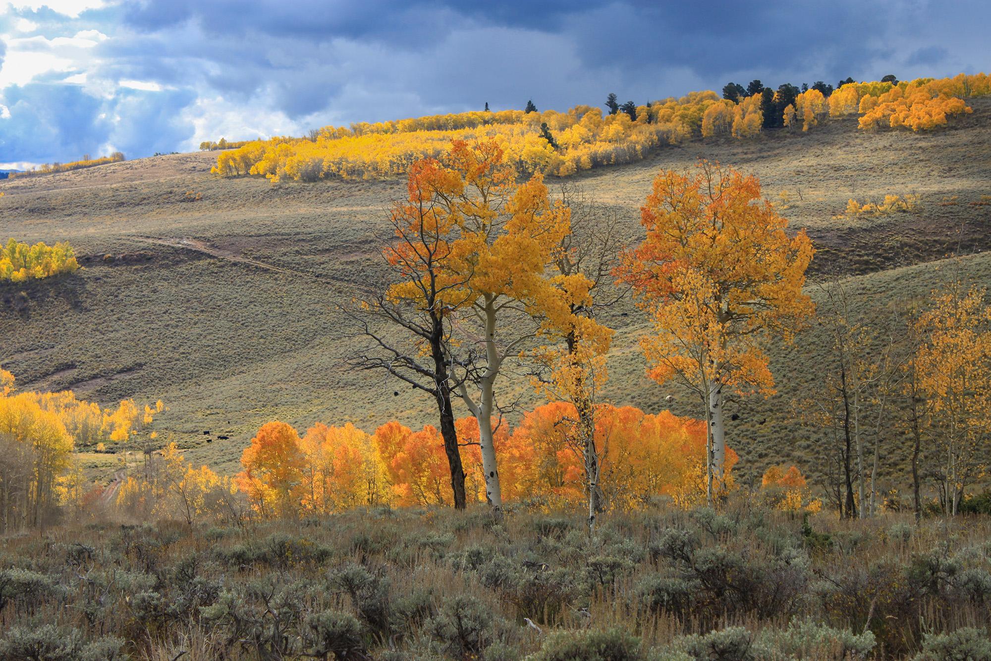 Fall hunting season in Colorado