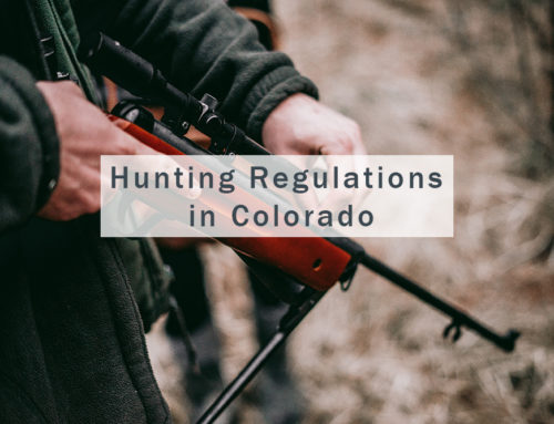 Hunting Regulations in Colorado — What You Need to Know