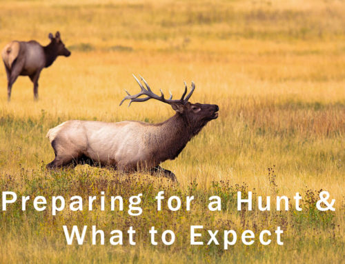 Preparing for Your Guided Hunt and What to Expect
