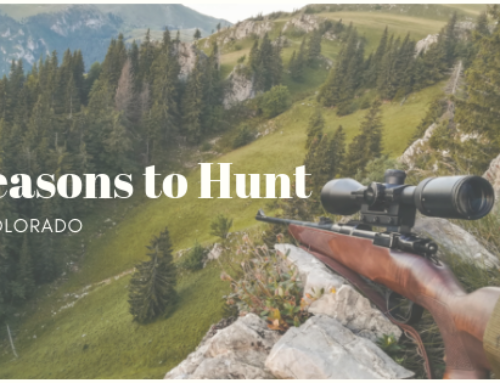 Reasons to Hunt in Colorado
