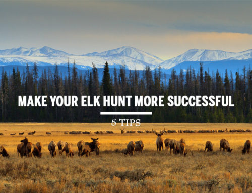 Tips to Make Your Elk Hunt More Successful