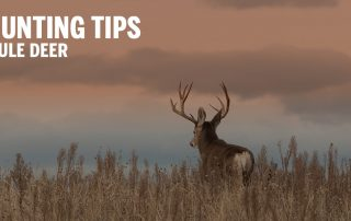 mule deer at sunset with text on image that says hunting tips mule deer