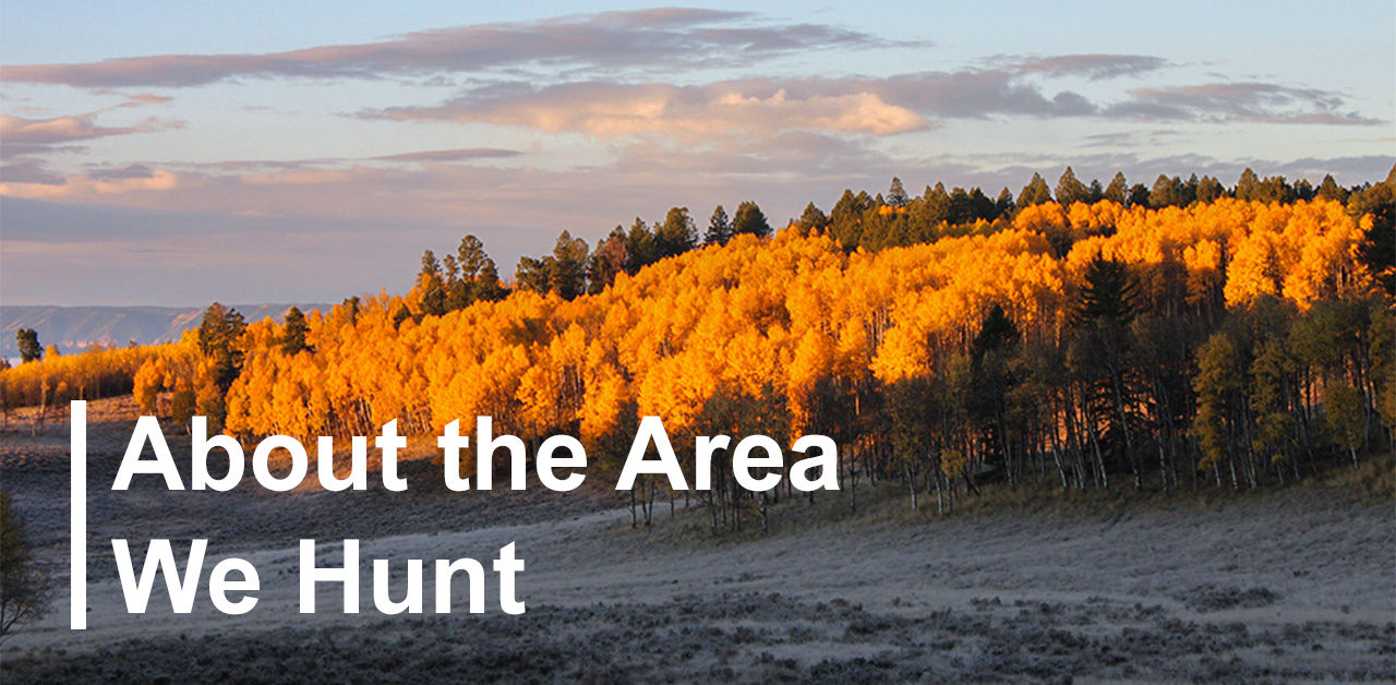 About the Area We Hunt in Gunnison National Forest