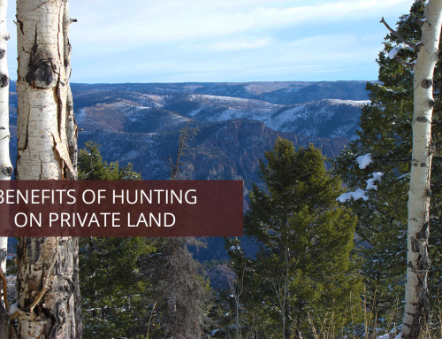 Benefits of Hunting on Private Land