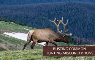 An elk roaming freely in the mountains of Colorado.