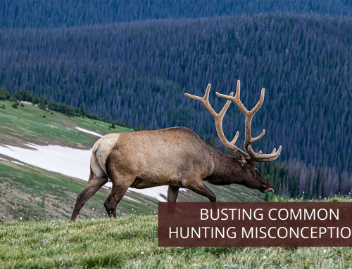 Busting Common Hunting Misconceptions